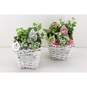 arr. PL - Mand 4 flowers - roze/wit