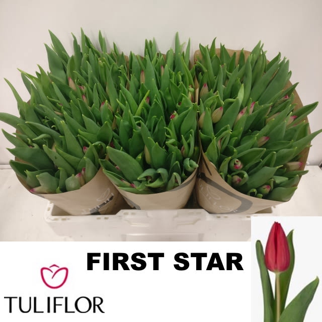 <h4>TU EN FIRST STAR</h4>