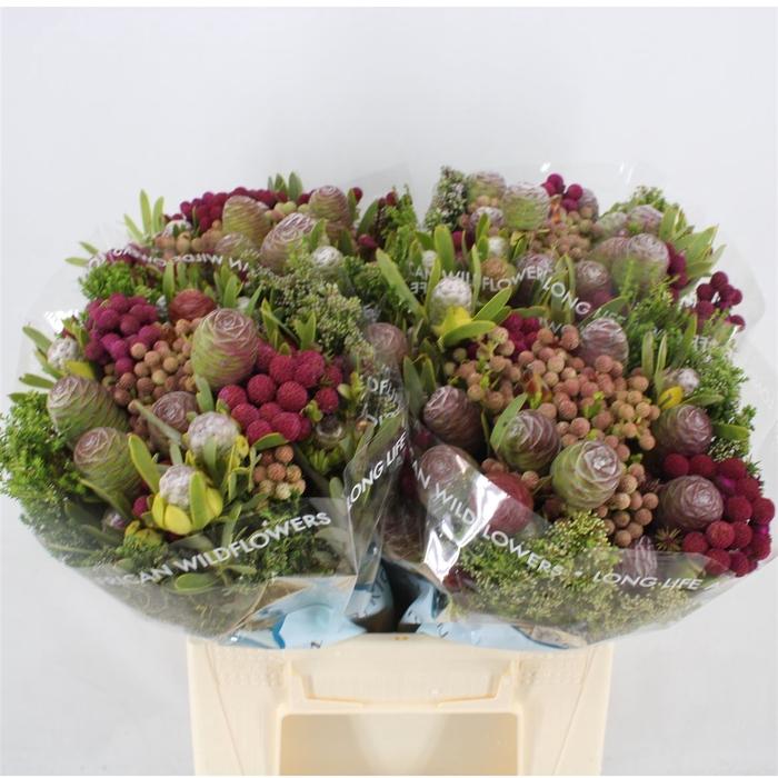 <h4>Bouquet Cone Mix Colour Treated</h4>