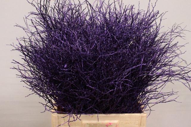 <h4>Heidelbeer Violet donker metallic</h4>