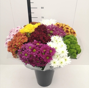 Chrysanthemum spray mix