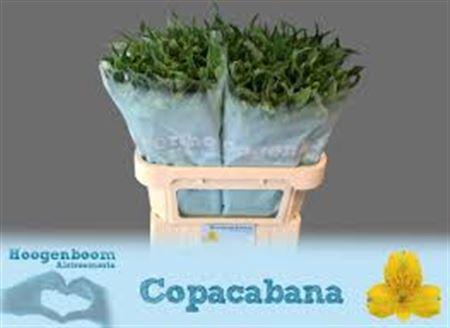 <h4>Alstr Copacobana</h4>