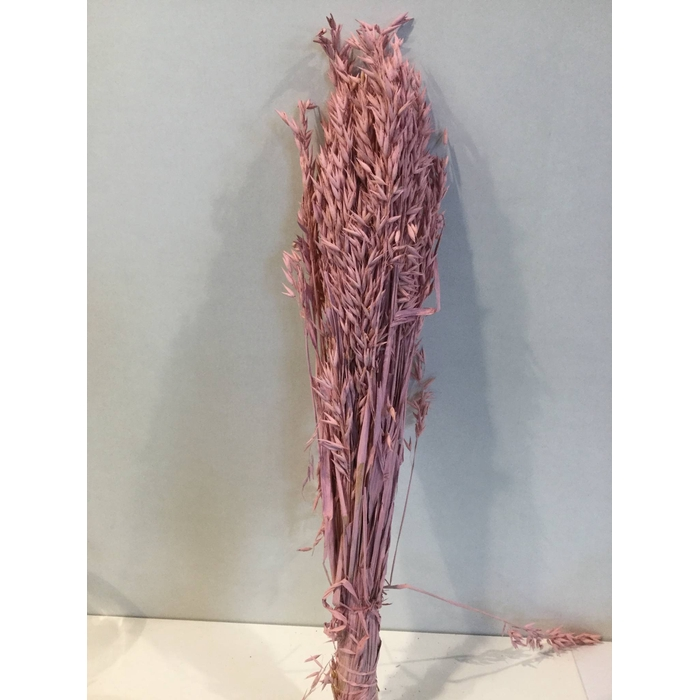 <h4>DRIED FLOWERS - HAVER PINK MISTY</h4>