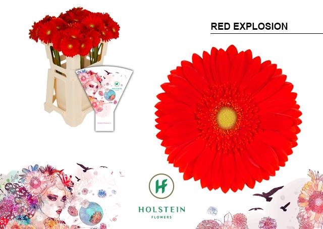<h4>GE GR hoes Red Explosion</h4>