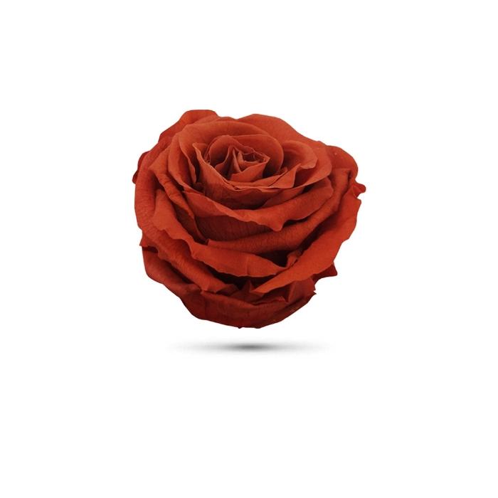 <h4>Rosa preservada cabeza marron</h4>