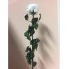 Roos op steel Standard 55cm Wit