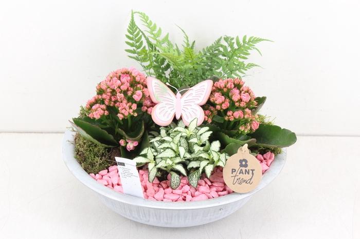 <h4>arr. PL - Zink antiekschaal - roze</h4>