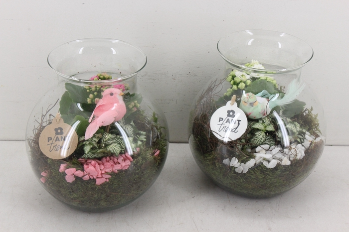 <h4>arr. PL - Glas Sydney - roze/wit</h4>
