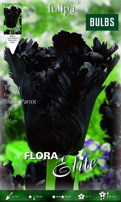 <h4>Z Tulipa Parrot Black Parrot</h4>