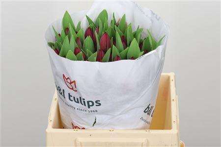 <h4>Tulp En Royal Cherry</h4>