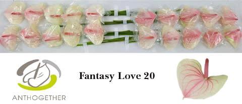<h4>ANTH A FAN LOVE 20.</h4>