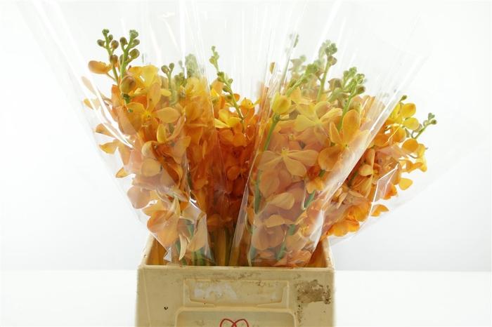 <h4>Mok New Orange L</h4>