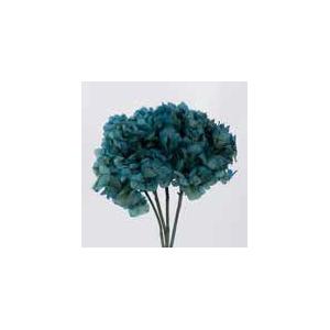 Hydrangea / Hortensia Blue Natural HRT/0610