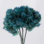 <h4>Hydrangea / Hortensia Blue Natural HRT/0610</h4>