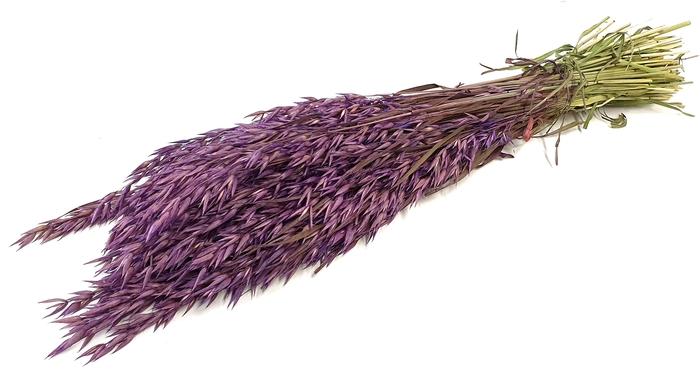 <h4>Avena per bunch purple</h4>