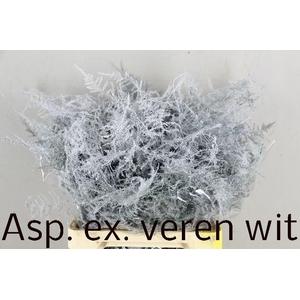 ASP OV KLB H%