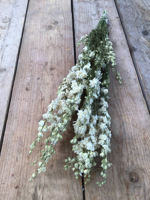 <h4>DRIED DELPHINIUM WHITE EXTRA BUNCH</h4>