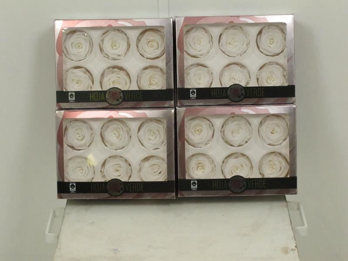 <h4>Preserved Roses White</h4>