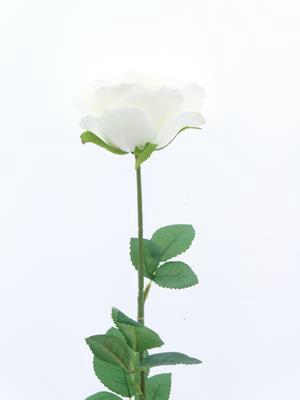 <h4>Af Rose Sco Bridal Ivory</h4>