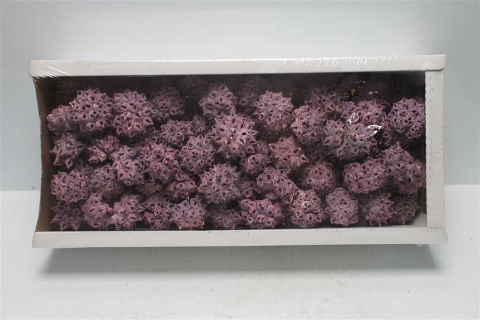 <h4>Spidergum Knobs Brombeer Frosted (100 St)</h4>
