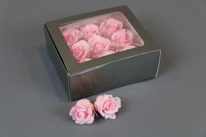 <h4>Rosa Preserved Bridal Pink Petite</h4>