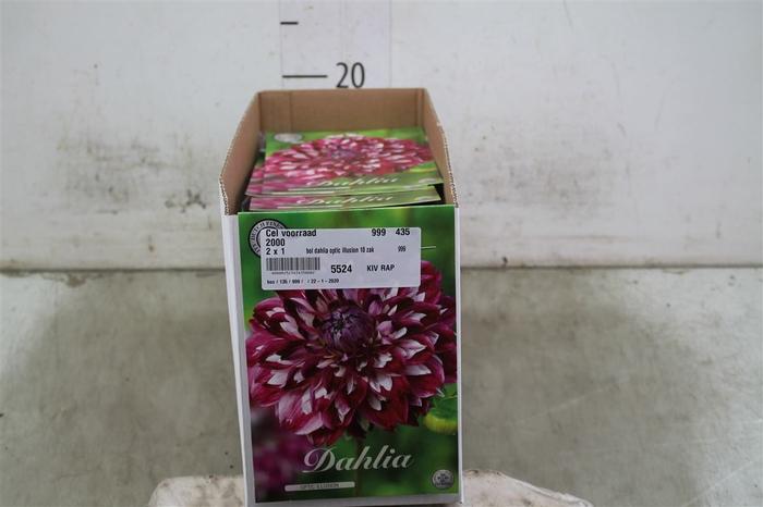 <h4>Bol Dahlia Optic Illusion 10 Zakjes X1</h4>