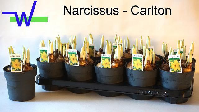 <h4>NARC G CARLTON</h4>
