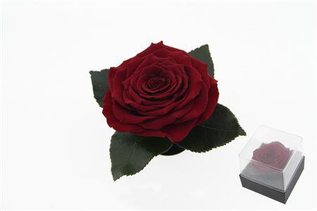 <h4>Pr 9.3 Giftbox Red-01 Xxl Gb3</h4>