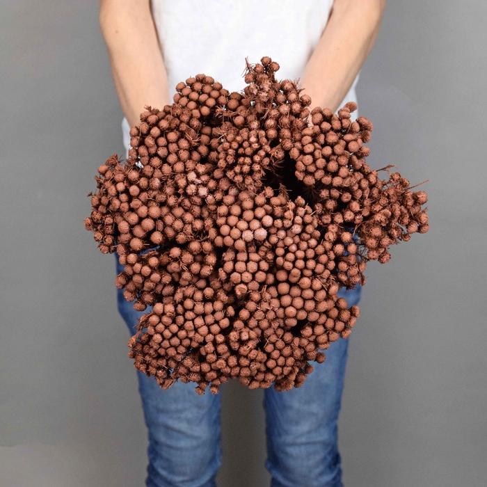 <h4>Dried Brunia Vintage Brown</h4>