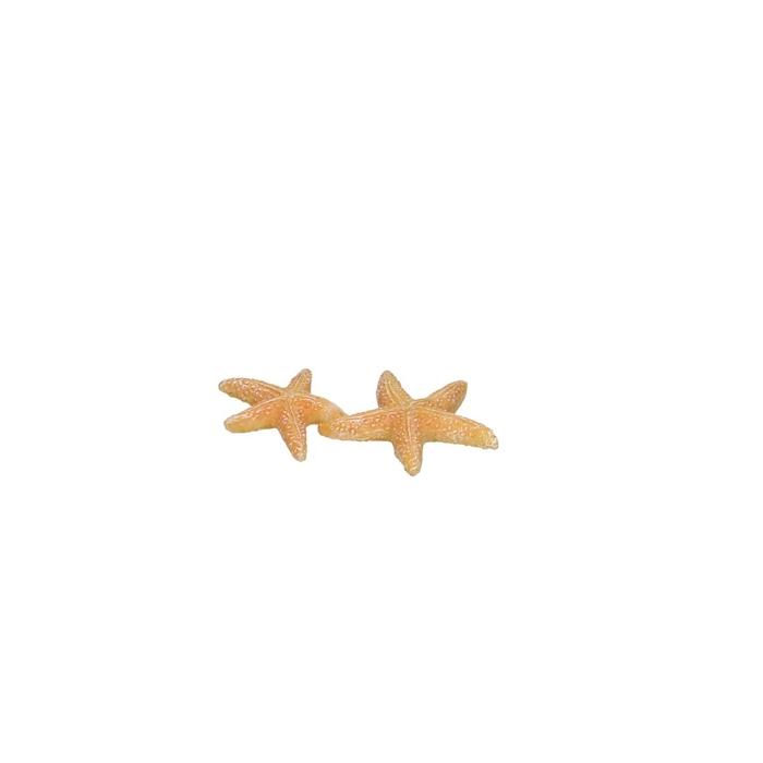 <h4>Shell Starfish d6.5*4cm</h4>