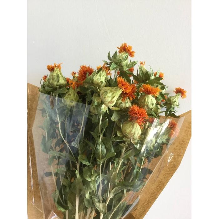<h4>DRIED FLOWERS - CARTHAMUS 10PCS</h4>