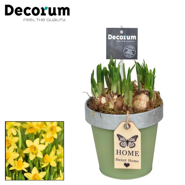 <h4>Narcis Bucket & Border Maxi HL17523N</h4>