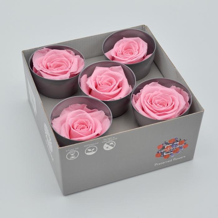 <h4>R PR Queen Pastel Pink</h4>