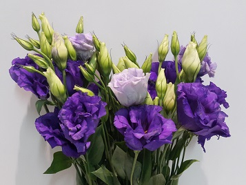 <h4>Lisianthus Purple (Farm Fresh) p/bunch)</h4>