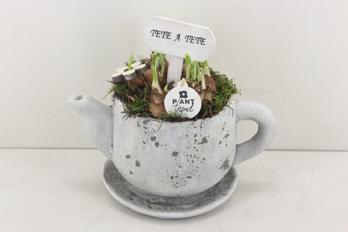 <h4>arr.. Narcis PL - Theepot XL</h4>