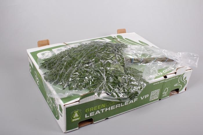 <h4>Ledervaren Extra VP Green Ocean x 12</h4>