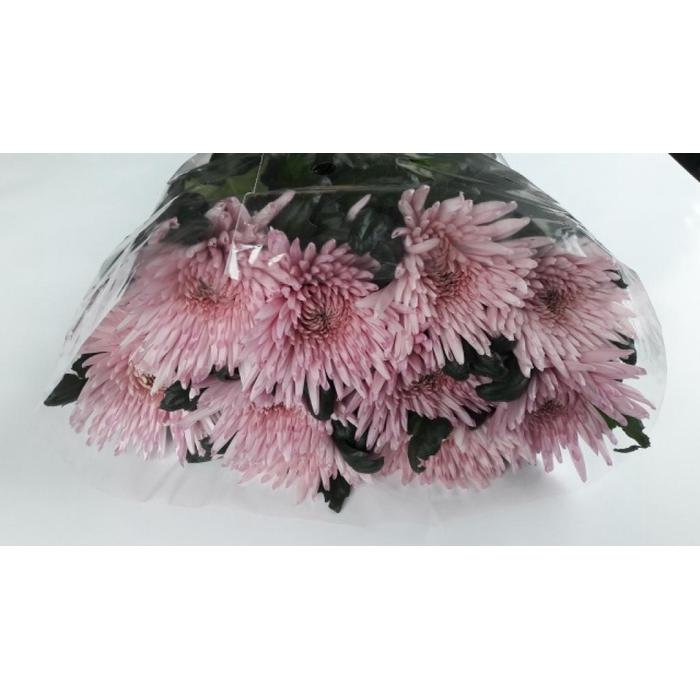 <h4>Chr G Anast Pink</h4>