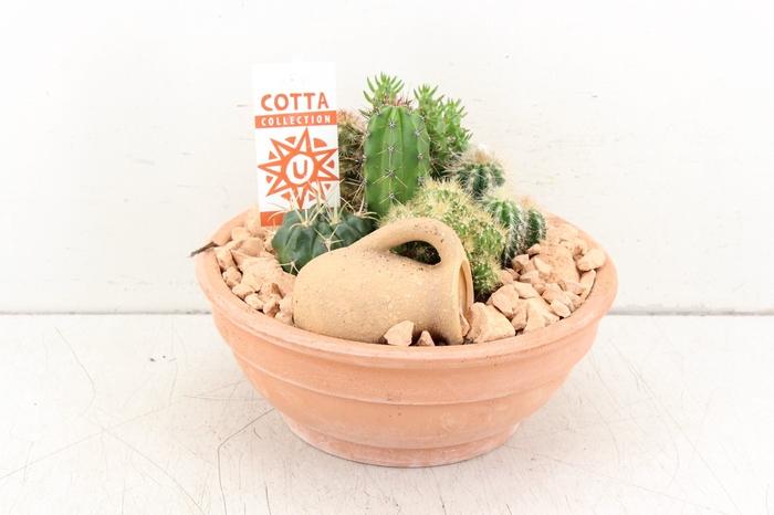 <h4>arr. UB - Terra cotta schaal cactus</h4>