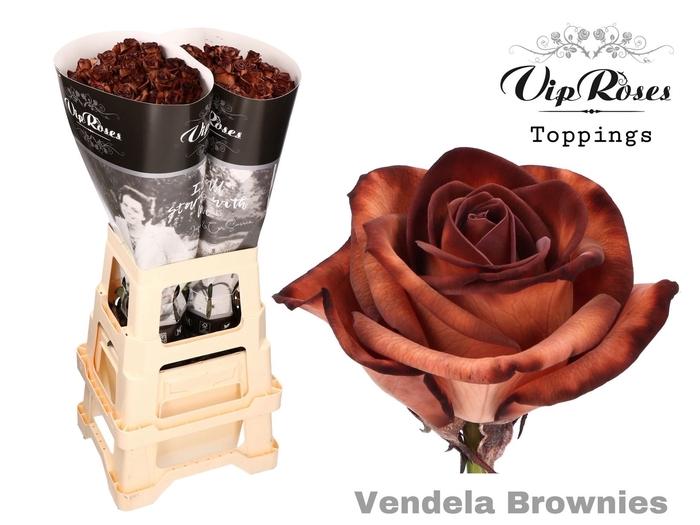 <h4>Prs GR BROWNIES VENDELA</h4>