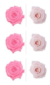 <h4>R Gr Prsv Classic Pink - BB Light Pink</h4>