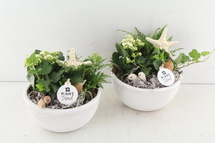 <h4>Arr. Pl Ker. Wit Plantschaal - Wit</h4>