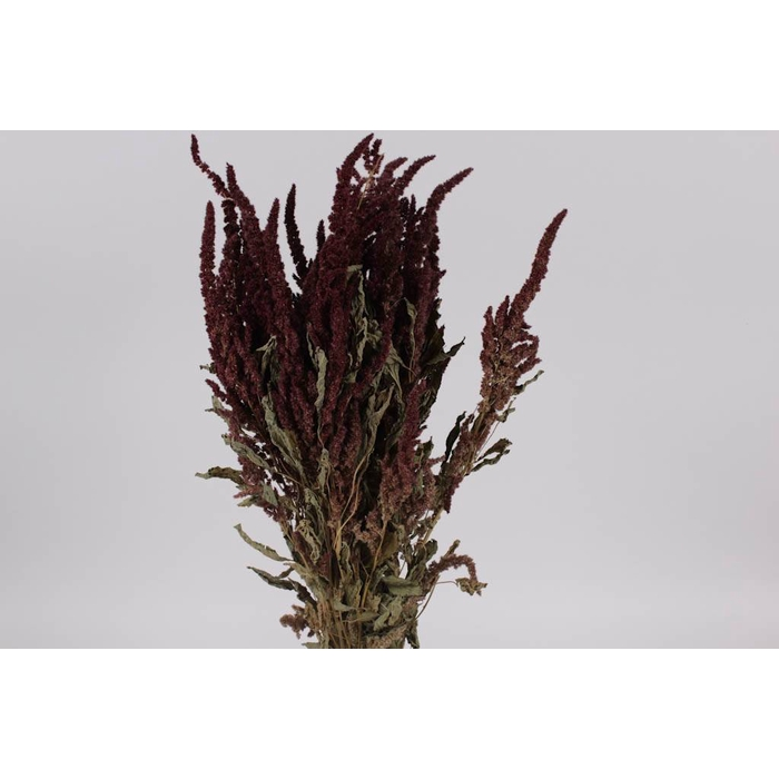 <h4>Amaranthus per bunch Red</h4>