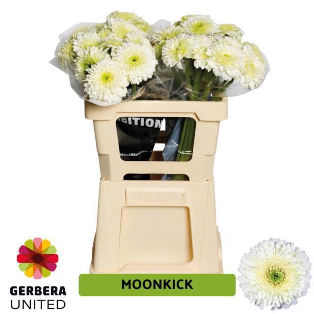 <h4>GE GR Moon Kick</h4>