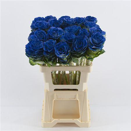 <h4>Brassica Blue</h4>