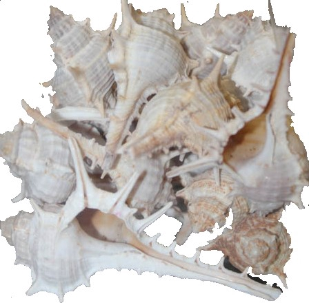 <h4>Shell Katta chimmam 1 kg in poly</h4>