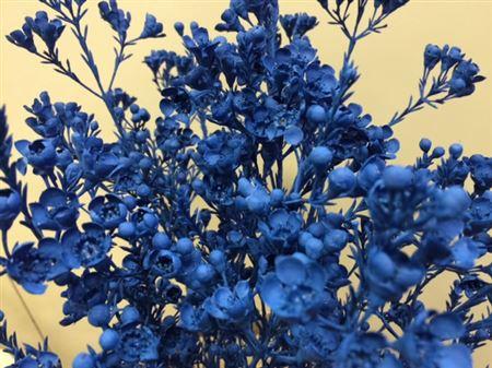 <h4>Wax Flower Blue</h4>