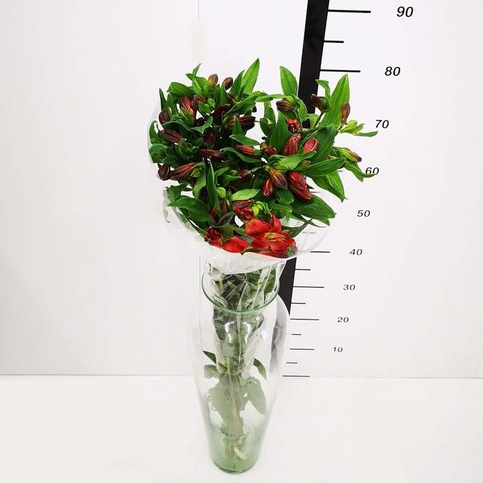 <h4>Alstroemeria roja</h4>