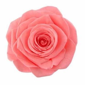 Rose Monalisa Pink Nectar