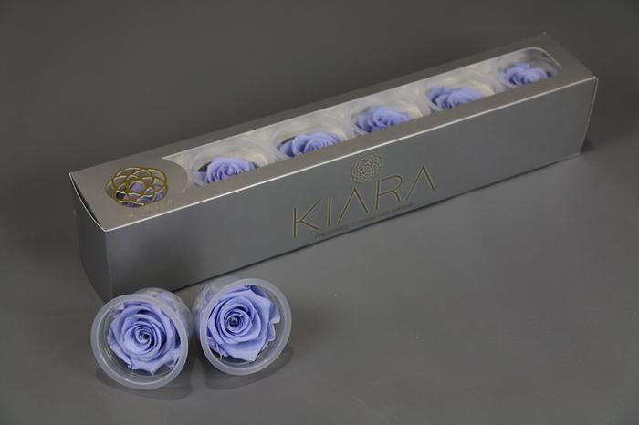 <h4>Rosa Preserved Cool Lavender</h4>