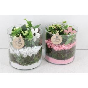 arr. PL - Glas cilinder 15x15 - roze/wit